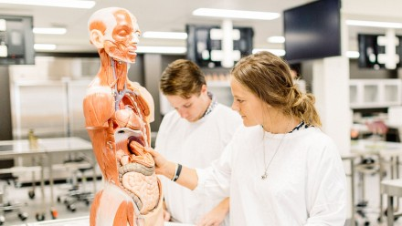 Students studying anatomy